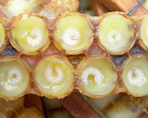 Оптимизировать работу щитовидки поможет прием пчелиного маточного молочка.
