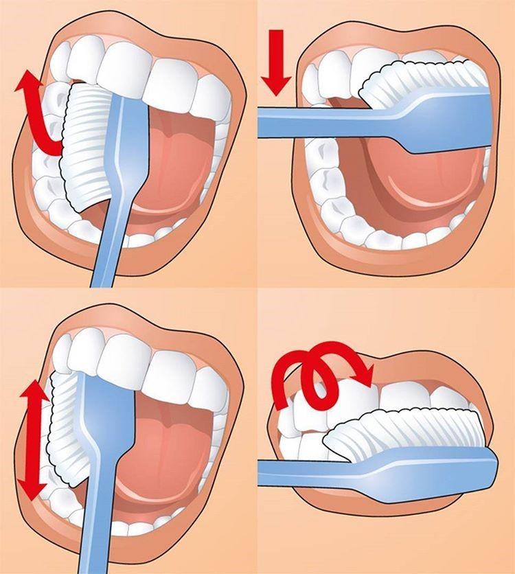 На фото методы чистки при ежедневном уходе за полостью рта