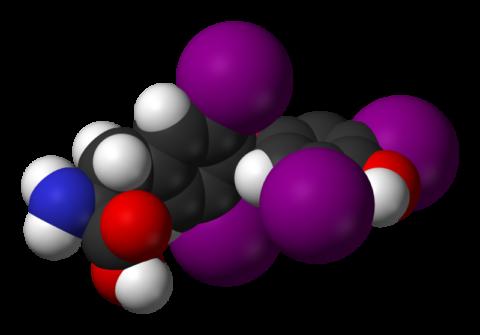 Молекула тироксина. Подробнее о гормоне Т4 вы можете узнать из видео в этой статье
