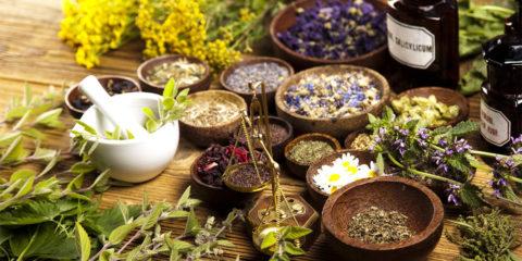 Лечение повышенного ТТГ травами популярно среди адептов народной медицины